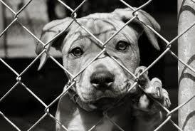 Adopting a dog in pa